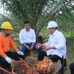 BPDP-KS Abadikan Keberhasilan Presiden Jokowi - Dodi Reza
