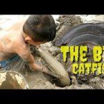 Sindiran dari Senayan untuk Politikus Ikan Lele Pembuat Keruh Keadaan