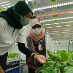 Program Container Farming Pertama di Ibu Kota, Percepat Masa Tanam Hidroponik